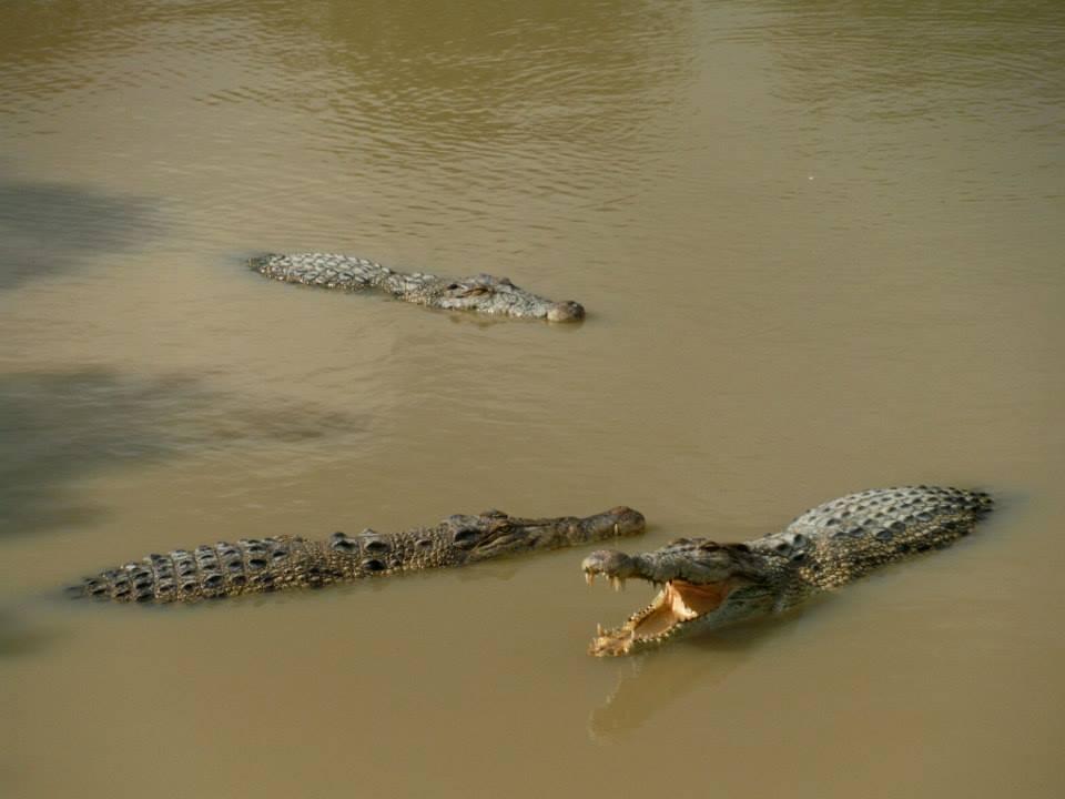 Centrum rozrodcze krokodyli Thaketa