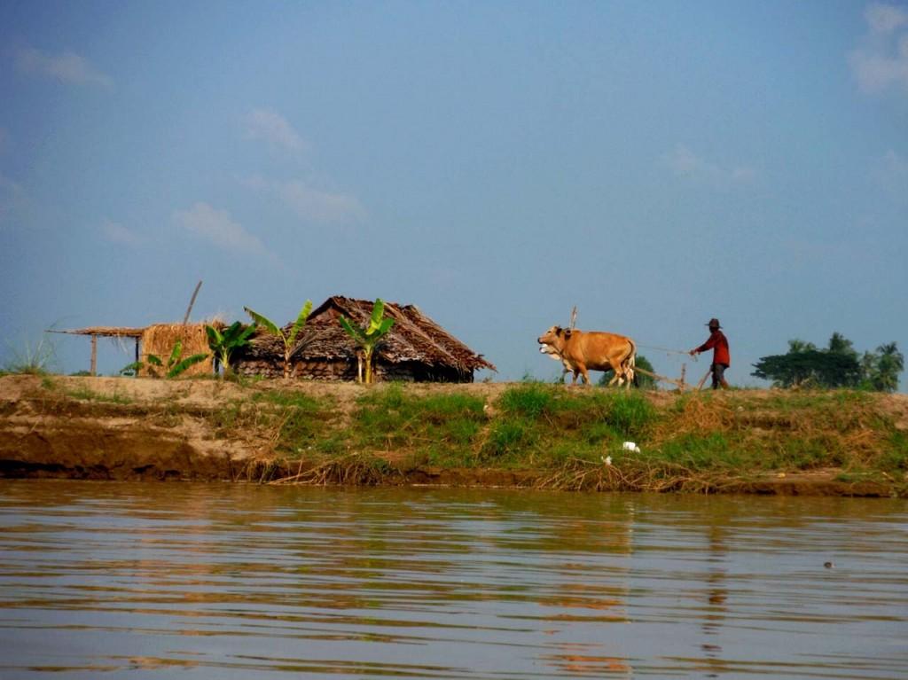 Życie nad rzeką