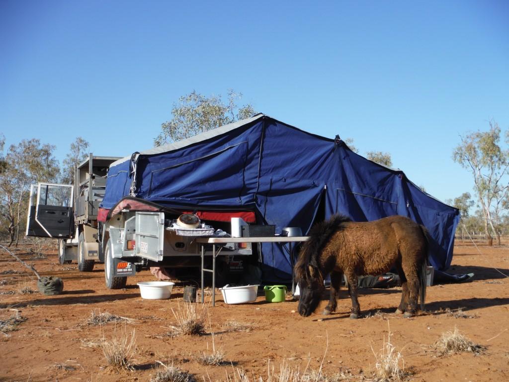Konie w obozowisku
