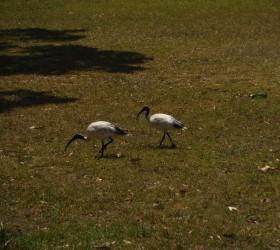Dziwne ptaki