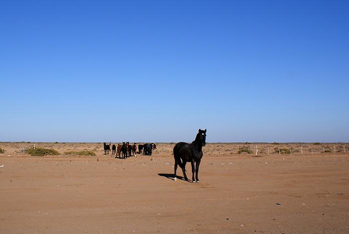 Konie przy drodze